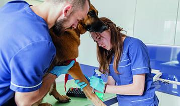 Curs d'Assistència a l'Atenció Clínica en Centres Veterinaris (SANT488_3)